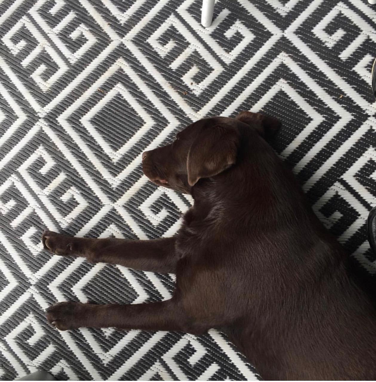 De labrador en ons interieur