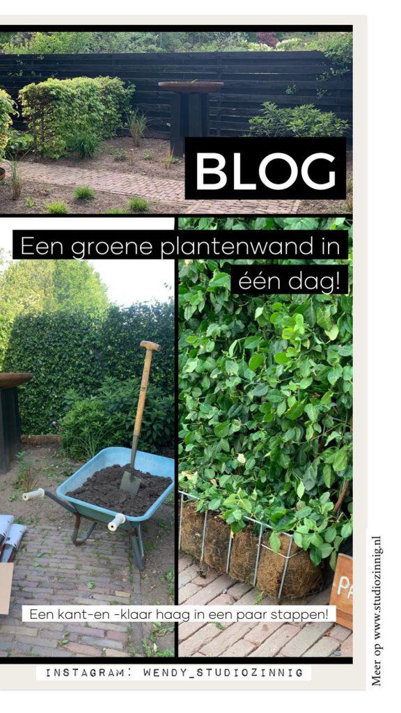 Blog een groene plantenwand in een dag
